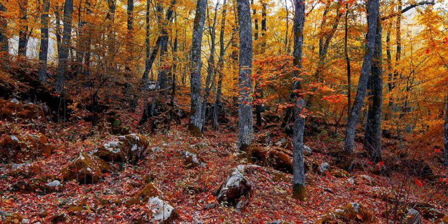 Istranca Ormanları'nda Sonbahar..