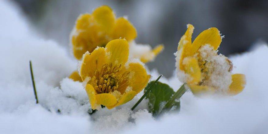 Doğu Anadolu'da baharda kar yağışı yaşama renk kattı