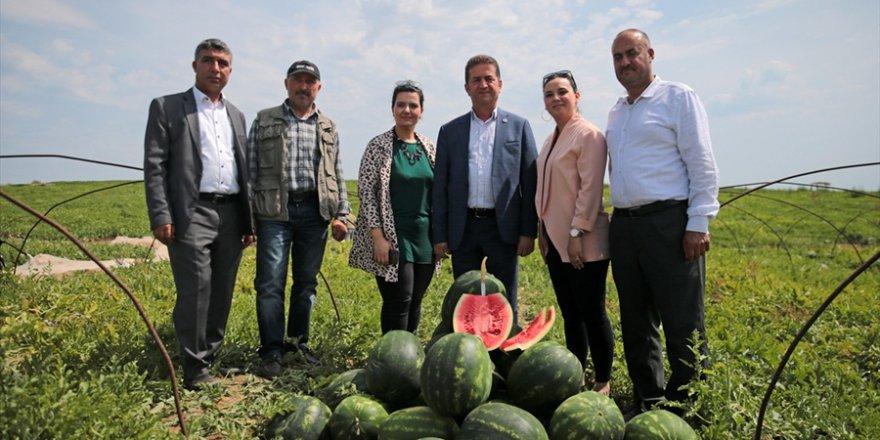 Adana'da 'ham karpuz timleri' iş başında