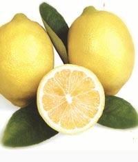 Silifke'de limon hasadı başladı ?