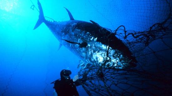 Türk balığı Avrupa'ya Polonya'dan girdi...