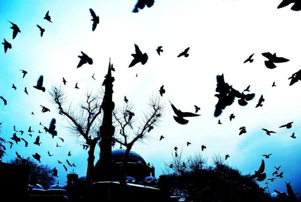 'Hacı Zeynep Ünsal Annemiz Hakka Yürüdü'