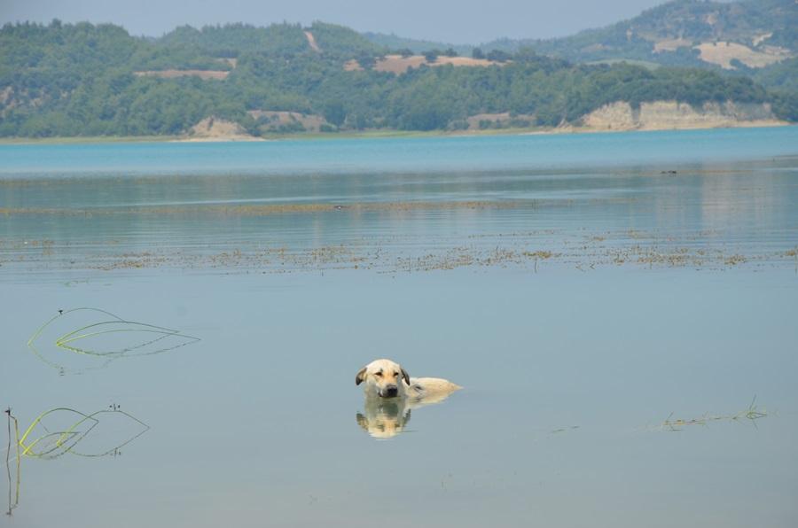Adana'da termometreler 48 dereceyi gösterdi, köpekler göle girdi