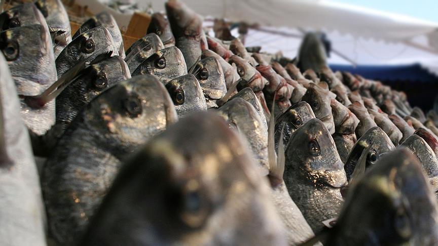 TİM Sektörler Konseyi Üyesi Sagun: Balık ihracatımız 1 milyar dolara ulaştı