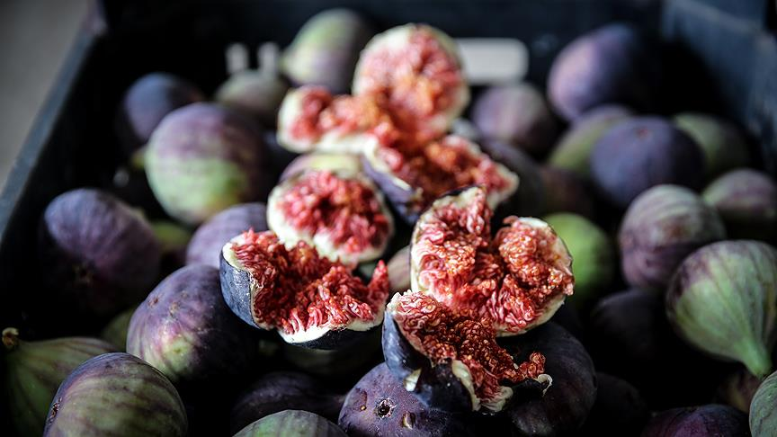 İngiliz Kraliyet ailesinin gözdesi taze siyah incirin ihracatı 29 Temmuz'da başlıyor