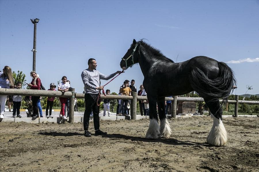 Bin 200 kilogramlık at görenleri şaşırtıyor