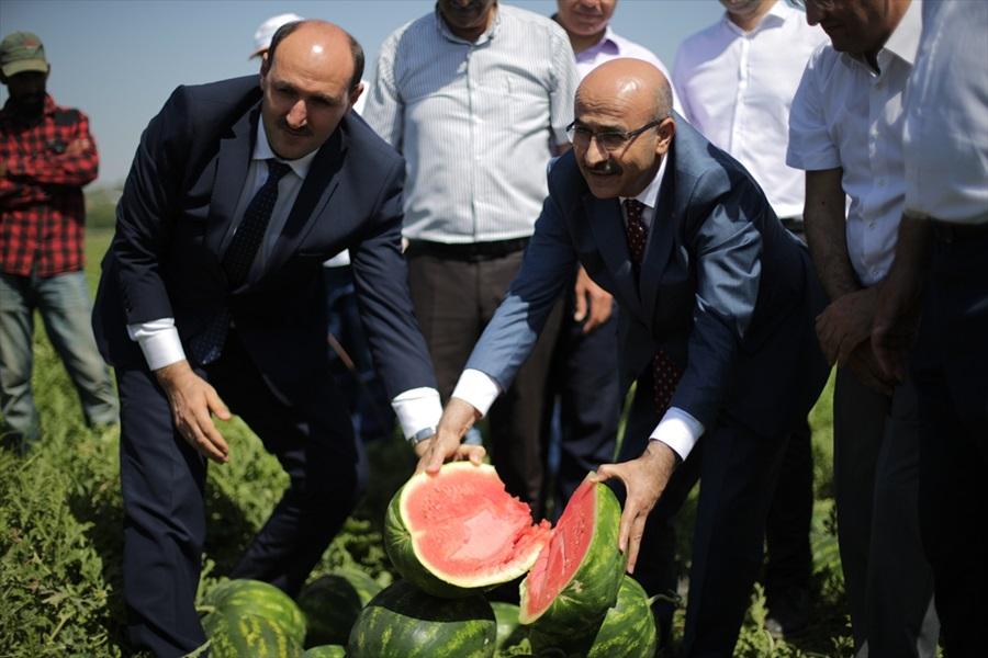 Adana karpuzunda hasat sürüyor