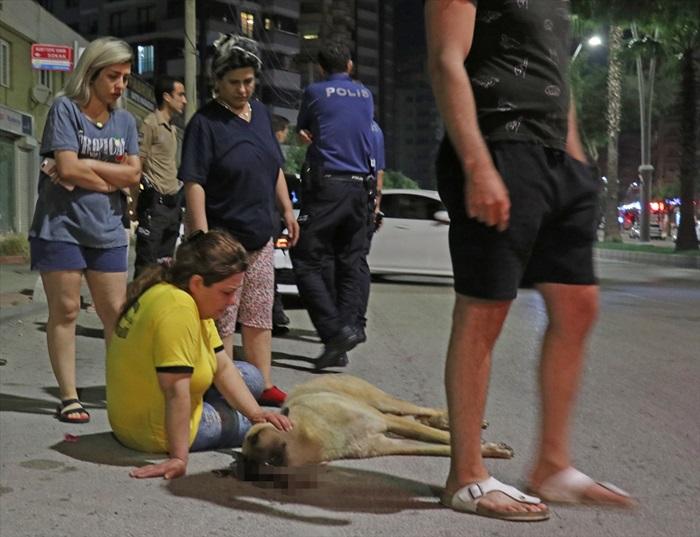 Otomobil çarpan sokak köpeğinin başında dakikalarca gözyaşı döktü
