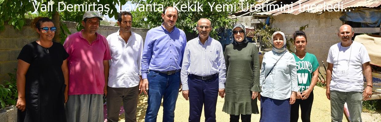 Vali Demirtaş, Lavanta, Kekik Yemi Üretimini İnceledi..