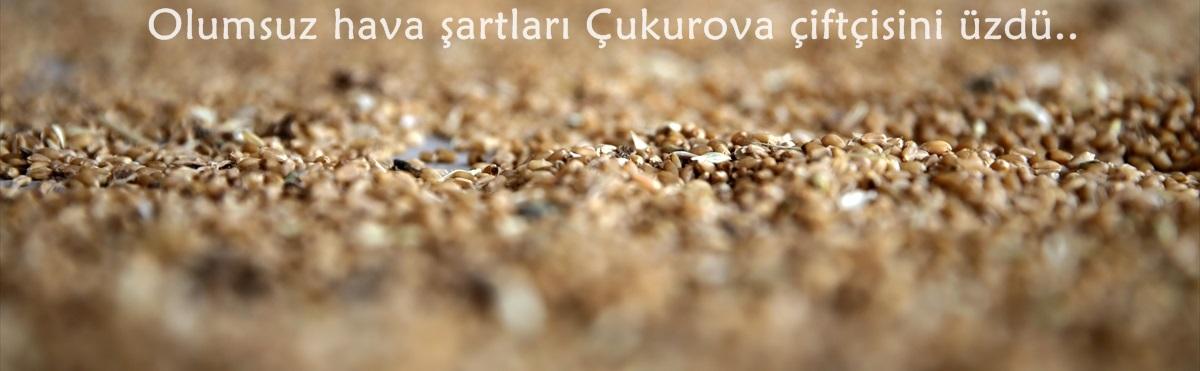 Buğday 1,74 liradan işlem gördü