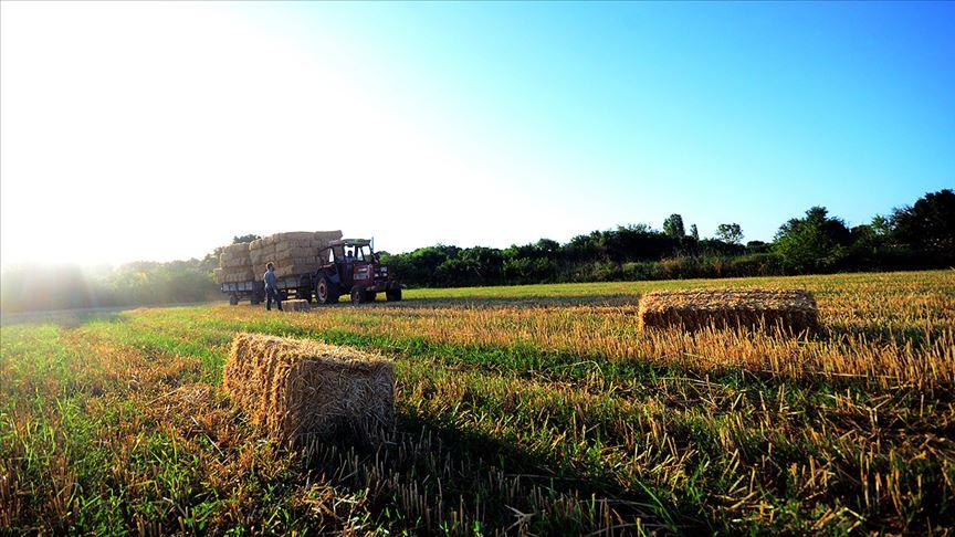 Buğday 1,67 liradan işlem gördü