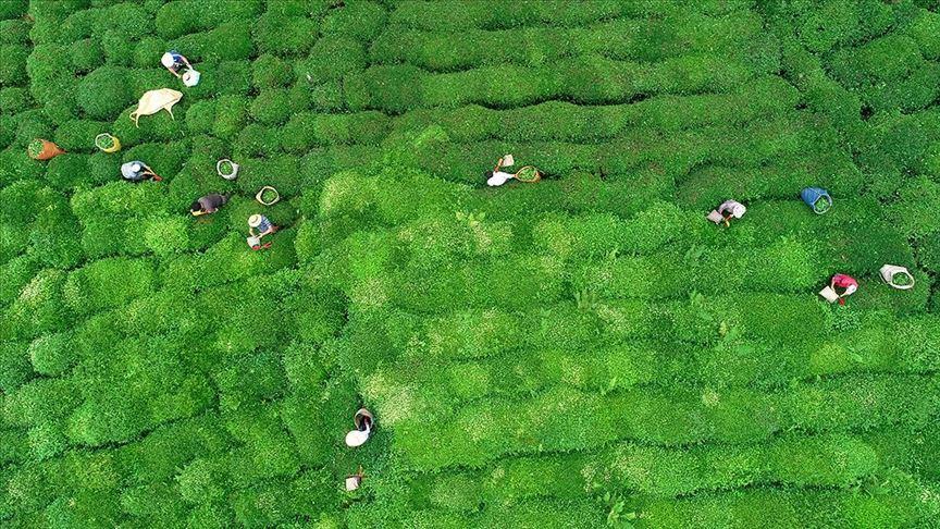 'Dünyanın her yerinde bizim çayımız var'