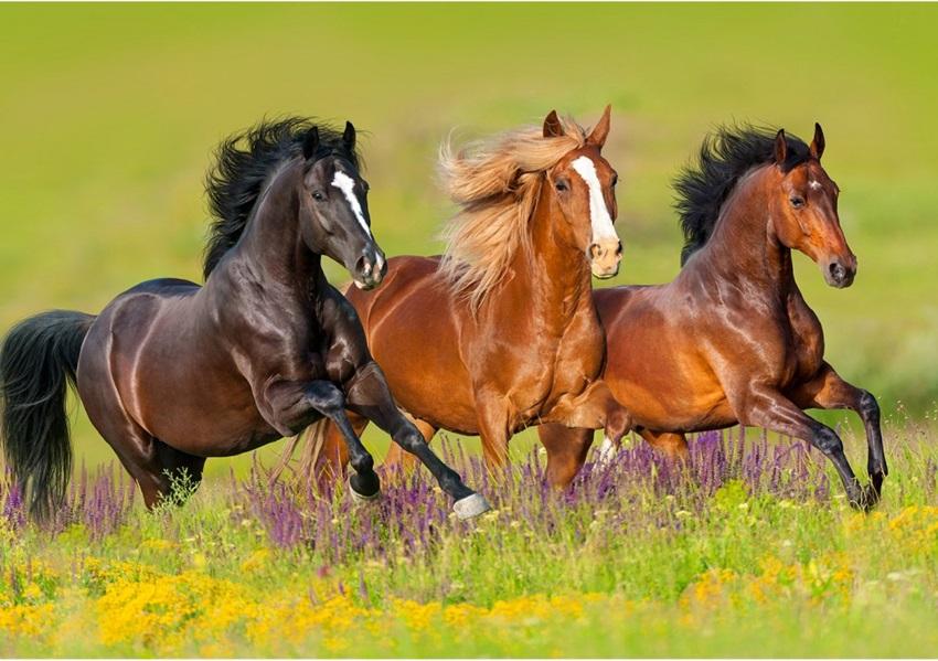 Mehmet Yürekli: O iyi insanlar o güzel atlara bindiler, çektiler gittiler..
