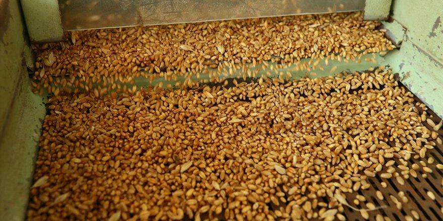 'Verim ve kaliteli ürün için sertifikalı tohum şart'