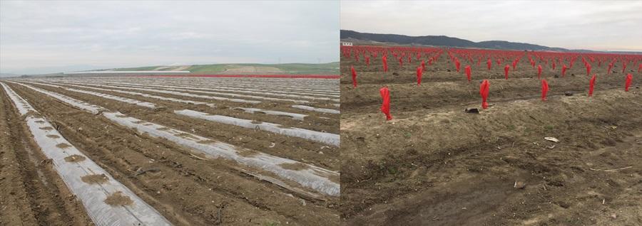 Adana'da zirai don narenciye ve sebzeleri olumsuz etkiledi