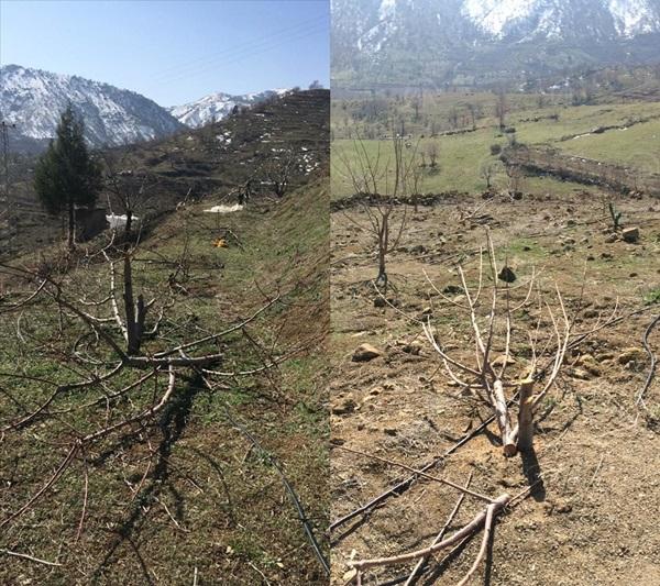 Adana'da bahçeden 110 kiraz ağacının kesildiği iddia edildi