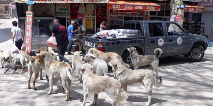 Sokak Ve Barınaktaki Hayvanların Beslenme İhtiyaçları Karşılanıyor