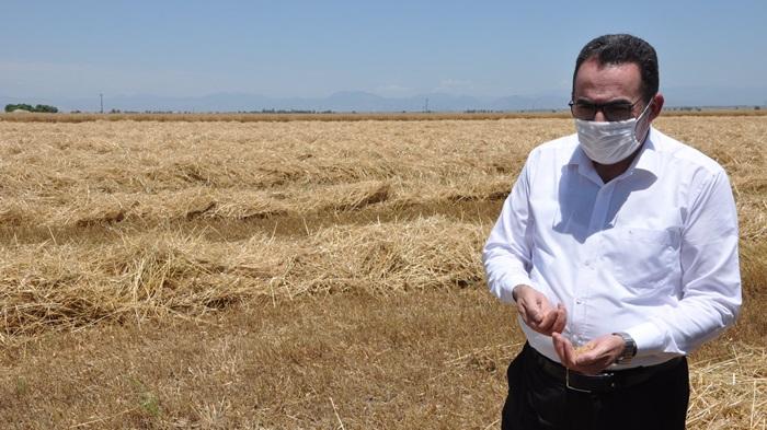 AK Parti Milletvekili Doğru, sıcaktan zarar gören alanlarda incelemelerde bulundu