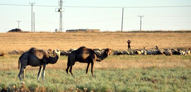 Suriye sınırındaki çatışmanın ardından