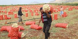 Tarım ve Orman Bakanlığından soğan-patates ihracatına ön izin açıklaması