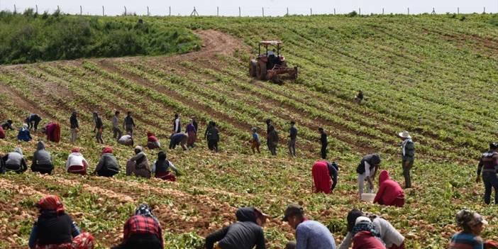 Pakdemirli: Türkiye patates üretiminde dünyada ilk 10'da
