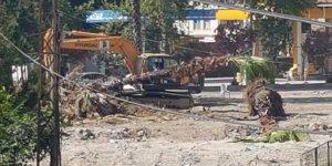 Ceyhan'da ağaçlar nakledildi