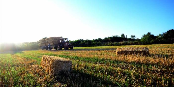 Buğday 1,58 liradan işlem gördü