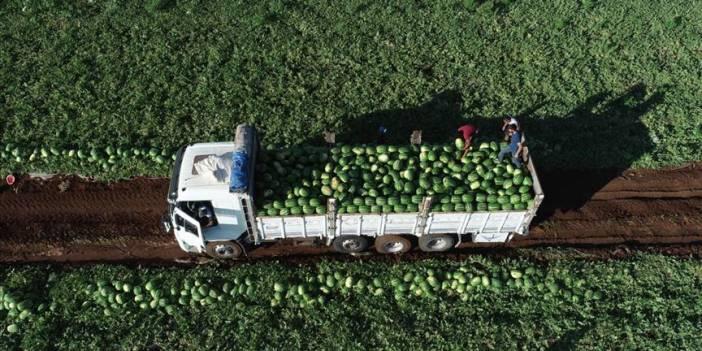 Türkiye'nin karpuz üretiminin yüzde 20'si Adana'da yapılıyor