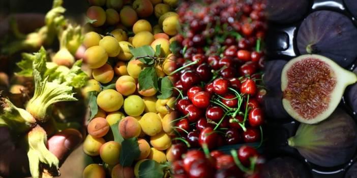 Türkiye 4 ürünün üretim ve ihracatında dünya lideri