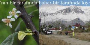 Çukurova'nın bir tarafında bahar bir tarafında kış yaşanıyor