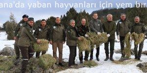 Adana'da yaban hayvanları için yem bırakıldı