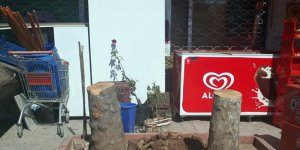Mersin'de iş yerinin önündeki çınar ağaçlarını kesen esnafa para cezası