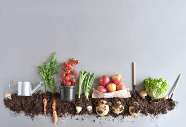 organik-yiyecekler.jpg