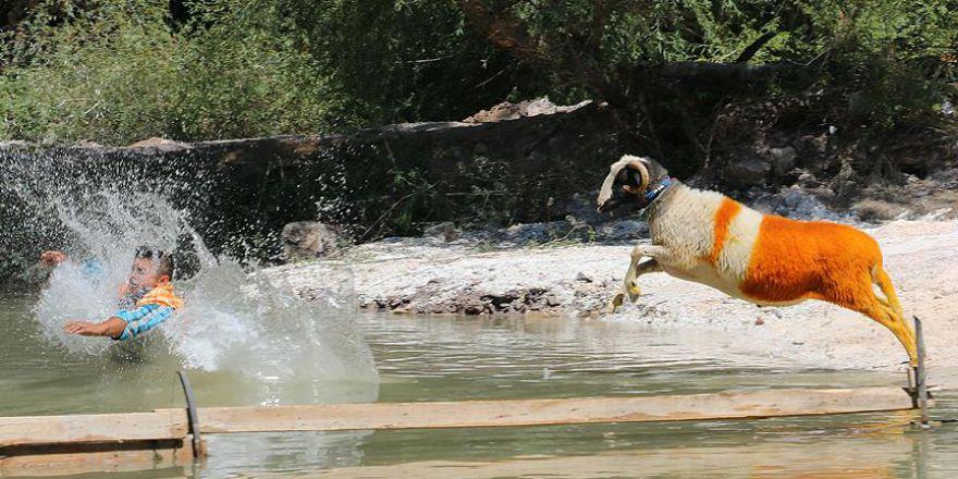 Sudan Koyun Geçirme Yarışması sona erdi