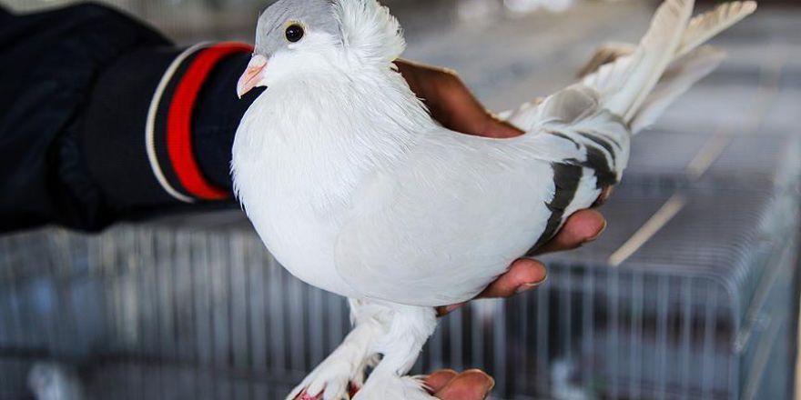 Güvercinler Diyarbakır'da görücüye çıktı